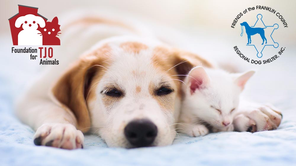 Aid for Local Animal Shelters
