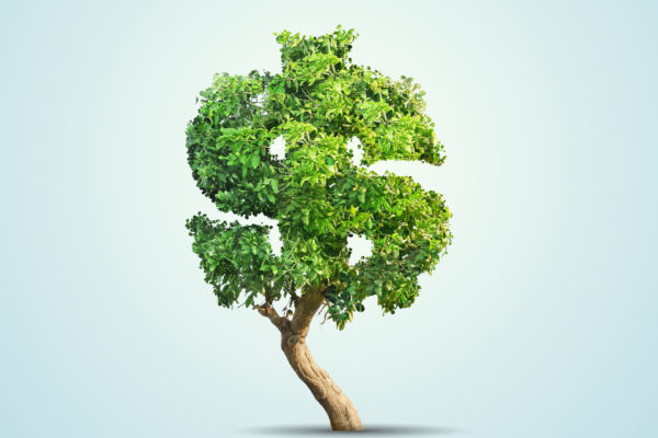 money tree from savings account
