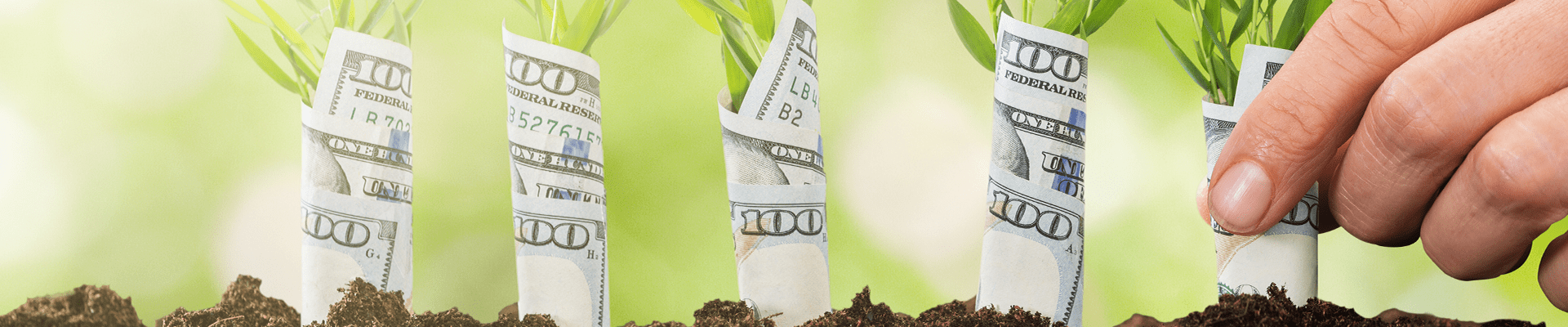 money growing from ground